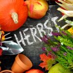 Was Gärtner im Herbst erledigen sollten